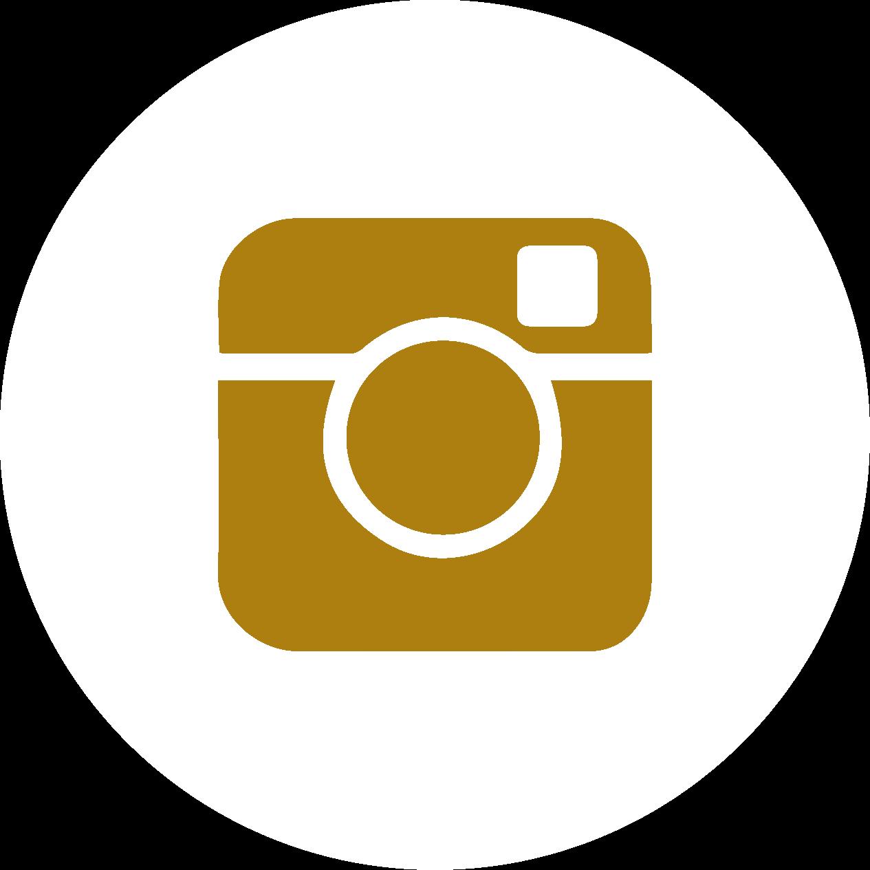 avital instagram